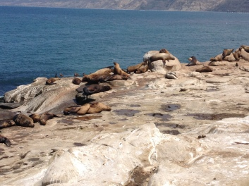 Sea lions abound